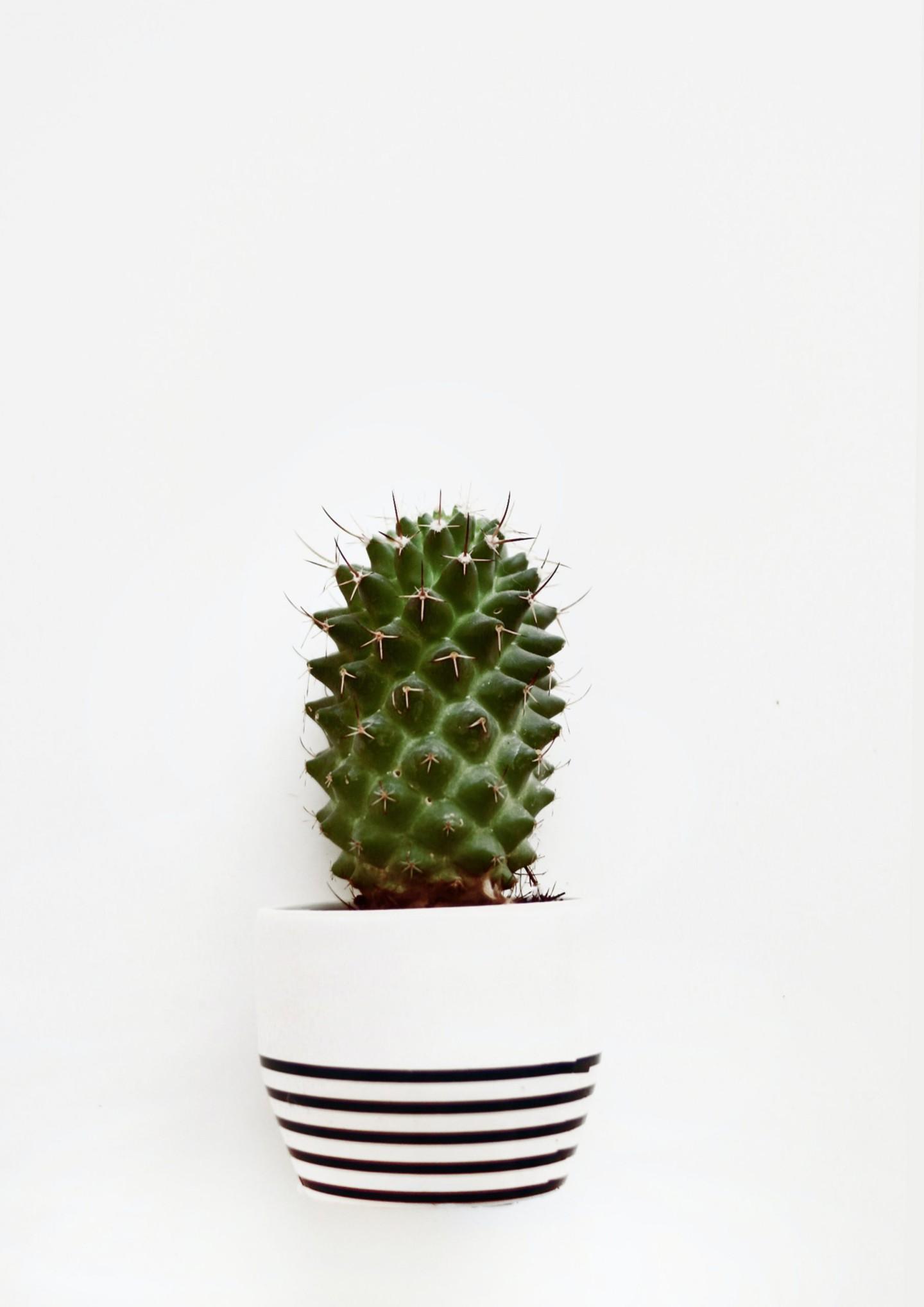 op-een-cactus-zitten